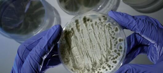 Nytt enzym oppdaget på dødbringende sopp. Kan være nøkkelen til ny behandling