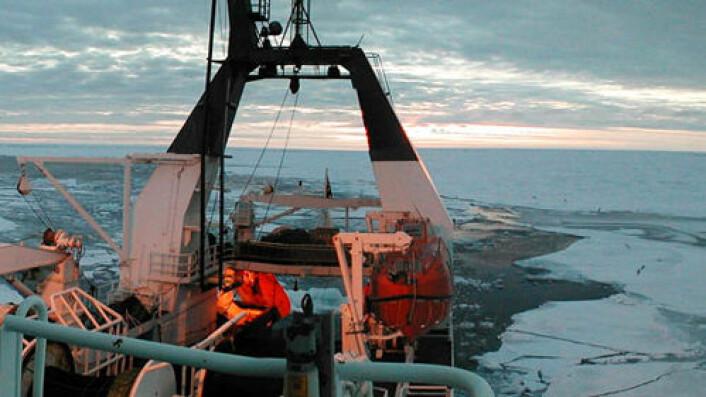 Under årets norsk-russiske forskningstokt har forskerne funnet både torsk og lodde rekordlangt øst i russisk økonomisk sone. (Foto: Havforskningsinstituttet)