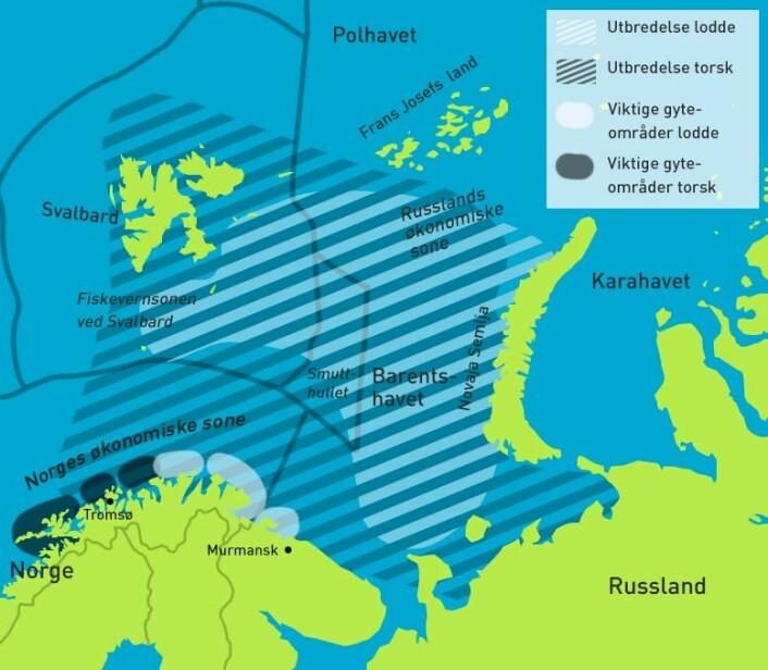 Kartet viser utbredelse og noen viktige gyteområder for torsk og lodde i Barentshavet. Torsken kan også gyte helt sør til Møre. I høst er det funnet tette konsentrasjoner av torsk og lodde lengst nord og øst i utbredelsesområdet. Kartet er basert på data fra 2012. (Foto: (Kart: David Brabrand/Asle Rønning/forskning.no. Kilde utbredelse og gyting: Havforskningsrapporten 2013, kilde økonomiske soner: Utenriksdepartementet)))