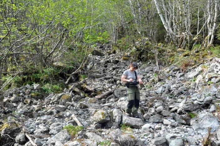 Kari Sletten fra NGU undersøker skredløpene nøye. Her i et va de «aktive» løpene, hvor det ikke er lenge siden sist det var bevegelse. (Foto: NGU)