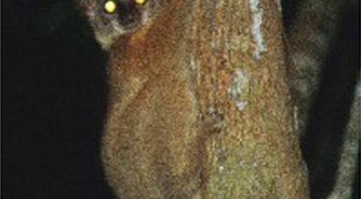 Nye lemurer
