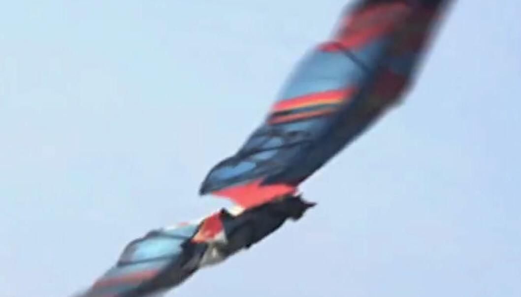 Videokunst: Fantasifiguren Jarno Smeets flyr med vinger i dette fingerte opptaket laget av den nederlandske animatøren Floris Kaayk. Floris Kaayk, fra video på YouTube