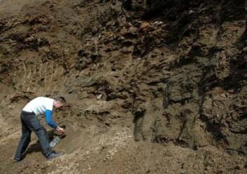 Det ser ut som et stort sandtak, men er i virkeligheten oppsmuldret fjell. Brennevinshaugen i Vesterålen er et kroneksempel på dypforvitring, viser forsker Ola Fredin. (Foto: Gudmund Løvø/NGU)
