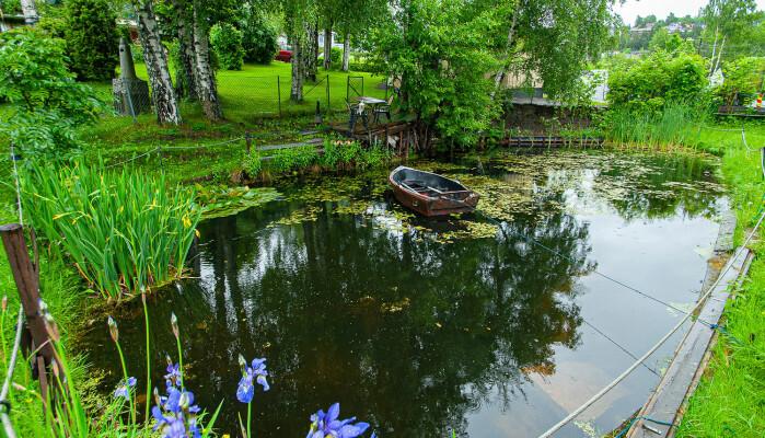 En litt større hagedam i Lier kommune som huser både masse vannplanter, små- og storsalamander og frosk.