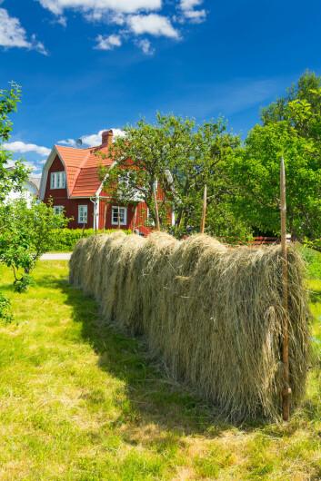Minnene om været på 1960-tallet bidrar til at svenske bønder ikke vil være med på at klimaet er i  noen varig endring. (Foto: Microstock)
