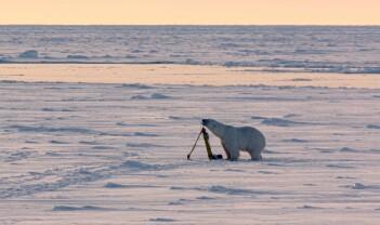 Mikroliv i Arktis er òg viktig
