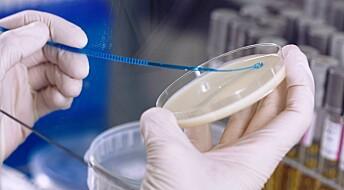 Jakter på salmonellabakterie med ny metode