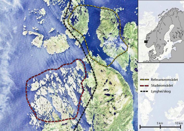 Satellittbilde som viser lyngheiområder og områder innenfor dominert av skog. (Foto: Ivar Gjerde/Skog og landskap)