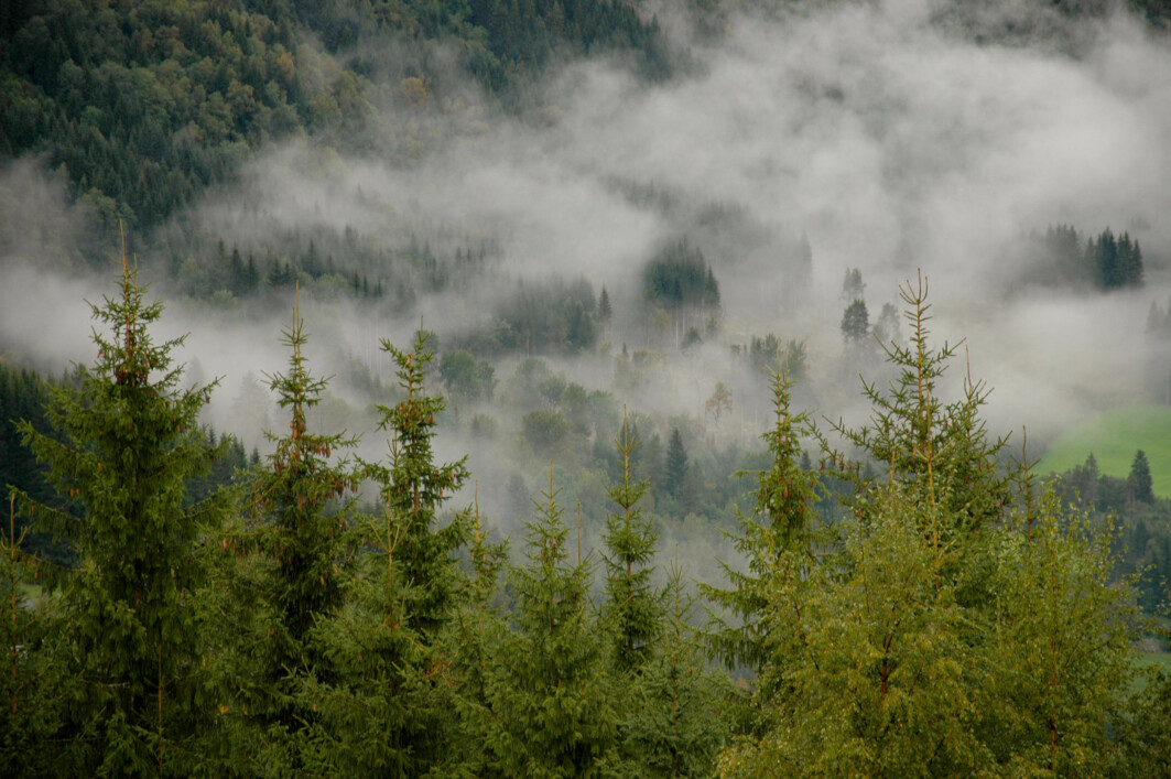 Trees change the landscape, and the consequences of afforestation may be adverse. Planting trees at higher latitudes, like Norway, influences the climate in other ways than planting trees in the tropics.