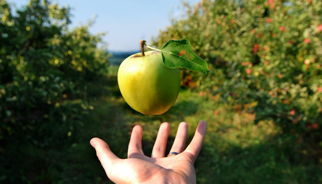 350 år etter at Newton grublet over epler som faller til jorda er dagens forskere opptatt av å undersøke hvordan gravitasjon påvirker antimaterie.