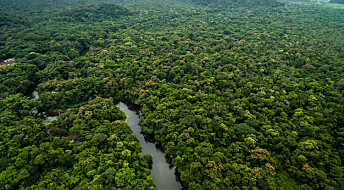 Det tok seks millioner år før regnskogen kom seg etter asteroidenedslaget