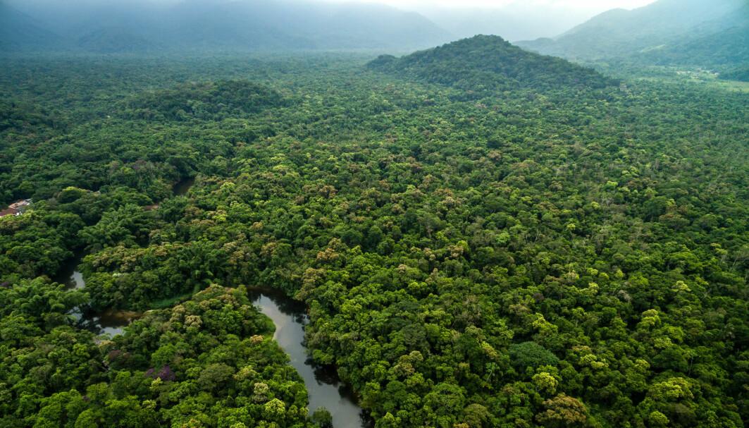 Regnskogen i Sør-Amerika slik den er i dag. Den var helt annerledes før det voldsomme asteroidenedslaget for 66 millioner år siden.