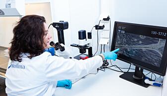 Sissel Rønning er forsker ved Nofima. Her ser hun i mikroskopet på en liten muskelfiber som hun har dyrket frem på laboratoriet.