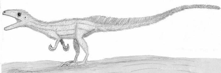 Oliver Rauhut, hovedforfatteren av artikkelen der dinosauren er beskrevet, har forsøkt seg på en illustrasjon av hvordan den levende Sciurumimus albersdoerferi ville sett ut. (Foto: (Bilde: Oliver Rauhut))