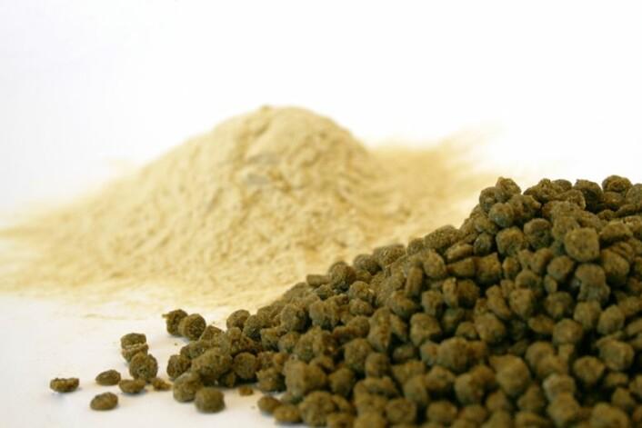 Gjær laget på cellulose er 2. generasjons bioressurs. Det betyr at det ikke er benyttet dyrket mark i produksjonen. Gjæren inngår som proteinkilde i fiskefôr. (Foto: Janne Karin Brodin)