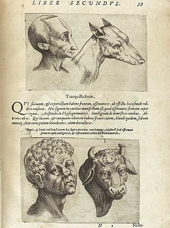 Illustrasjonen fra 1500-tallet som skulle vise ansiktstrekk hos mennesker og felles karaktertrekk med dyr de lignet på.