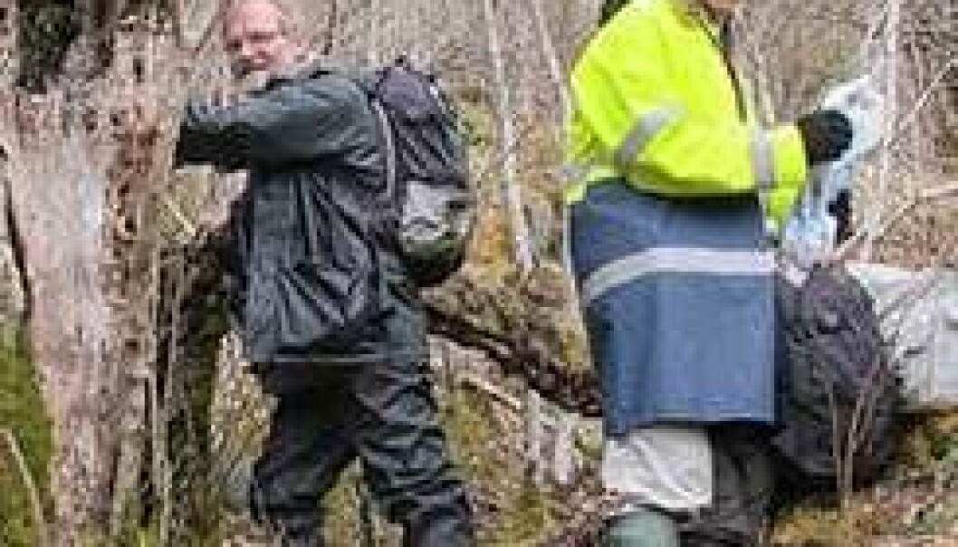 Mange nye sopper i edelløvskogen