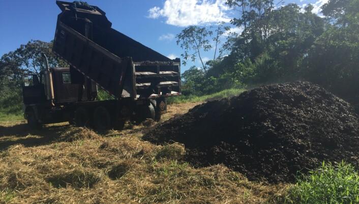 Lasteplan på lasteplan med kaffegrut ble dumpet på åkeren som tidligere hadde vært regnskog.
