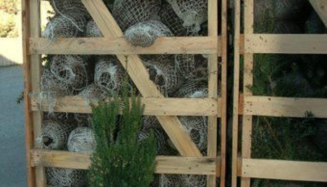 - Importplanter truer biomangfold