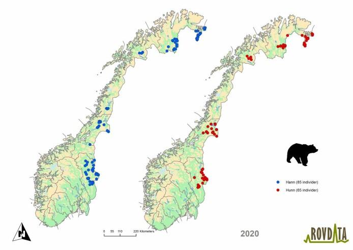 Kartene viser hvor bjørnene befinner seg.