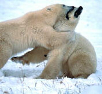 """""""Lekne isbjørner."""""""