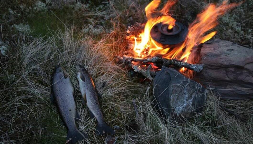 Hardangervidda gir også mulighet for de virkelig lange turene, med telt, fiske og naturopplevelser i stillhet og ro.