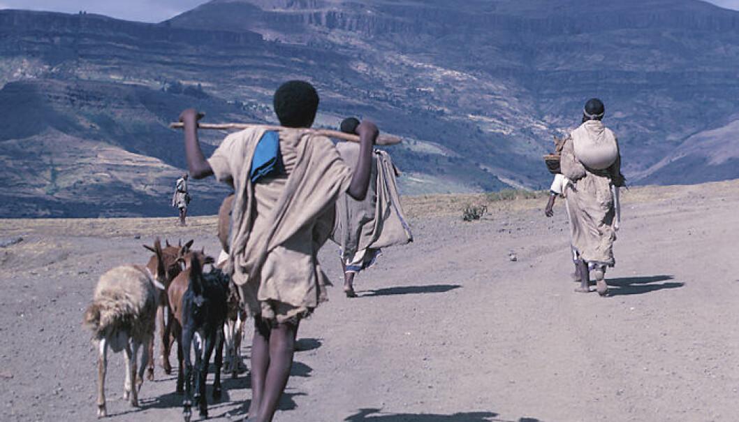 Tørrere utsikter for Afrika