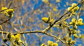 Nye metoder for pollenanalyse