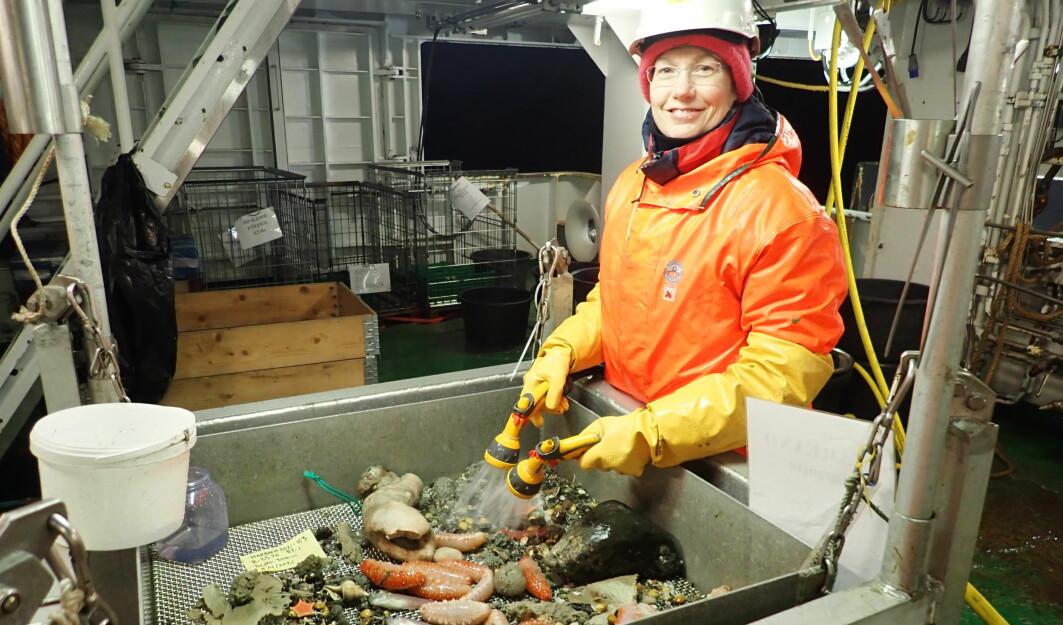 Her skyller Penny Lee Liebig (HI) en bomtrålprøve. Foto: Heidi Gabrielsen, HI.