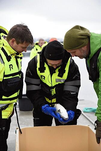 Forsker Arve Nilsen har brukt mye tid på å se etter lus på laks fra lukkede merder. Her sammen med Trond Otto Johnsen fra Akvafuture AS, t.v. og programleder i podcasten Kenneth Bruvik t.h.