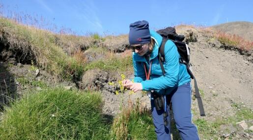 Fremmede planter invaderer Svalbard