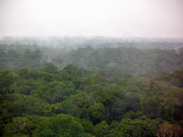 Regnskogen i Amazonas lager sitt eget regn. Utslipp fra trær, planter og sopp skaper partikler som sørger for at fuktigheten i lufta samler seg til skyer og regn. Bildet er tatt fra det 320 meter observasjonstårnet midt i skogen etter en regnskur. (Foto: C. Pöhlker, MPI for Chemistry)