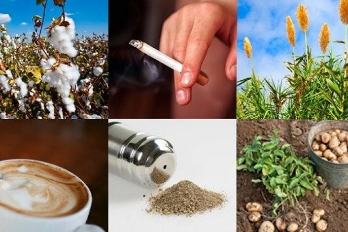 Bomull, tobakk, sukker, kaffe, pepper og potet har ført til revolusjoner, endret byggestilen og gjort oss mer edruelige. (Foto: Montasje: NRK/Colourbox)