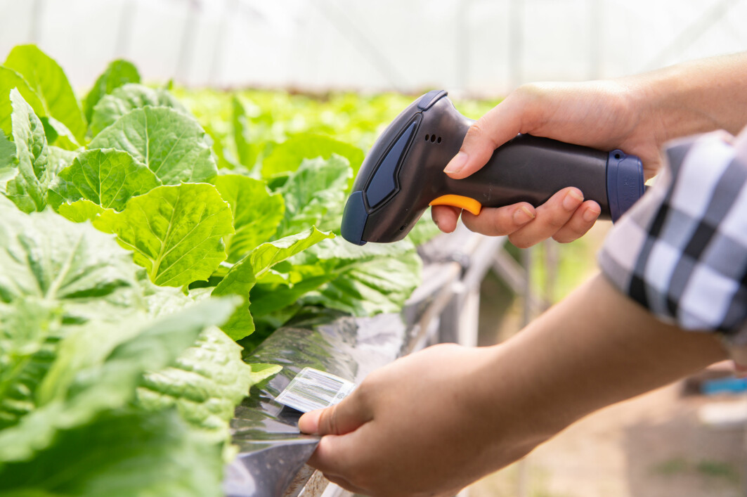 Using brand new technology, it will soon be possible for farmers to scan the produce before shipping it.