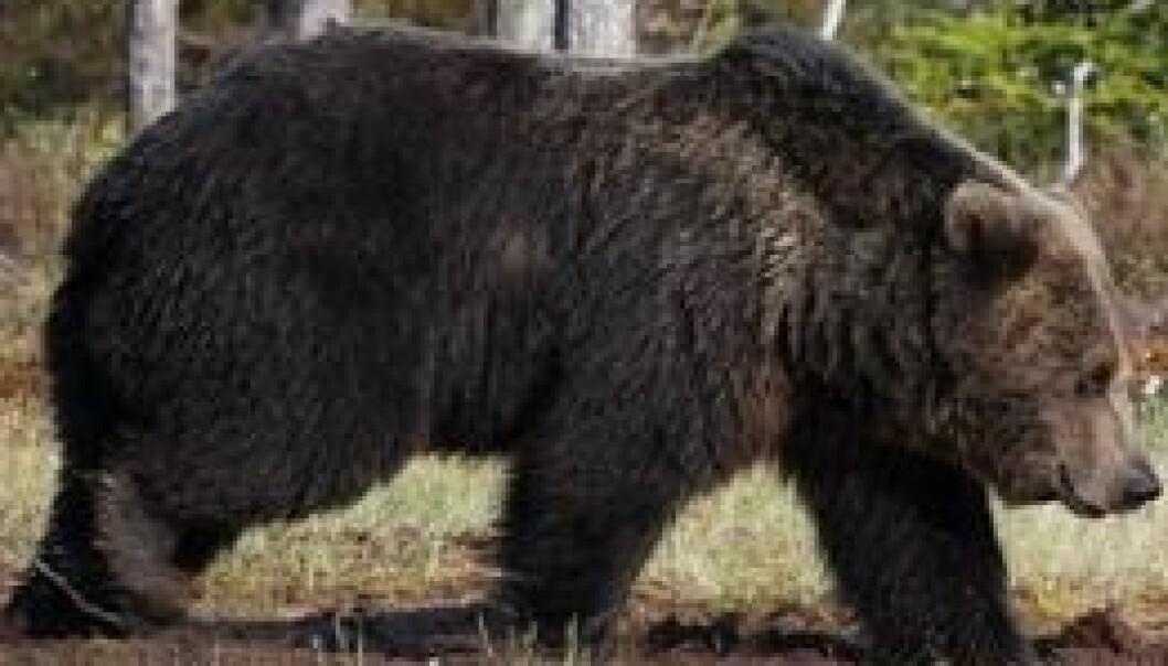 Godtar målene for store rovdyr