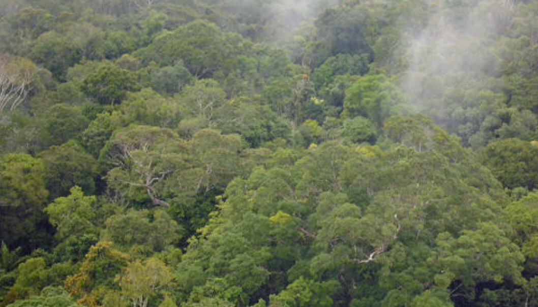 Amazonas lager sitt eget regn