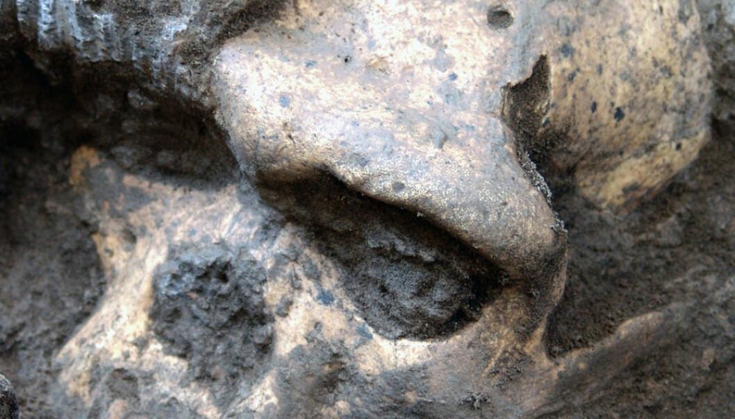Skalle 5, eller Dmanisi D4500, i det den graves fram. Georgian National Museum