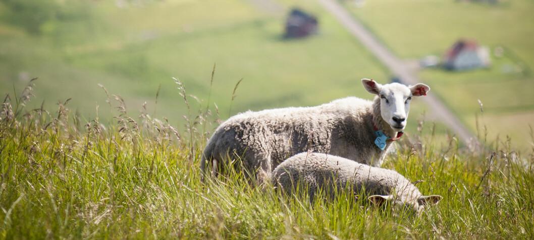 Ny rapport: Villedende debatt om bærekraftig matproduksjon i Norge