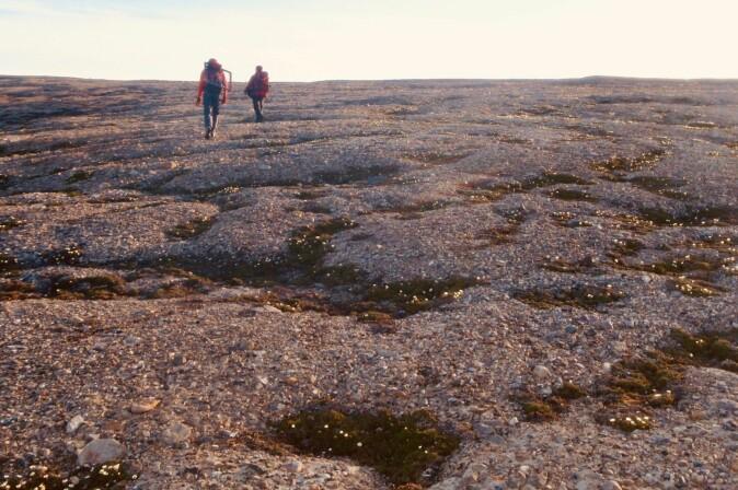 Fra feltarbeid i Gipsvika, Isfjorden, i 2009. Idunn Skjetne og Inger Greve Alsos er på vei tilbake til campen etter en lang dag i felt. I grusen i alle fordypningene vokser reinrose (Dryas octopetalae) – et godt eksempel på hvordan små planter kan klore seg fast på de mest overraskende steder.