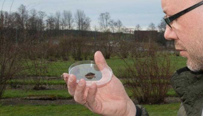 Bjørn Arild Hatteland, forsker ved NIBIO, vil se nærmere på biologisk kontroll med nematoder over tid. Forskerne planlegger også å utvikle en app for å gjenkjenne snegler. Den skal kunne identifisere skadelige eller fremmede sneglearter.