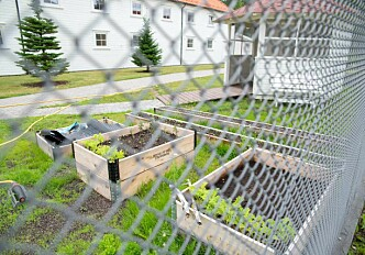 Blue-green food production in Norwegian prison
