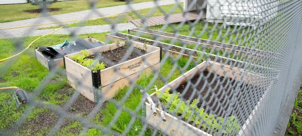 Matproduksjon i fengsel øker trivselen til innsatte