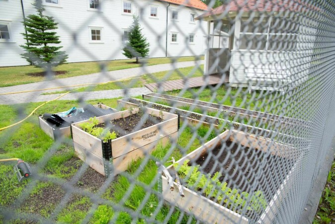 Evje prison has several green projects, among them a kitchen garden and a green house. Aquaponics adds an extra element to this, where plants and fish exist in the same system. The prison management hope to be able to carry on with the project in a smaller scale.