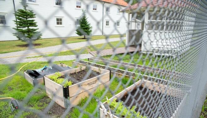 Agder fengsel avdeling Evje har flere grønne prosjekter, blant annet plantekasser og drivhus i hagen.