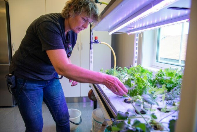 Ingebjørg Tønnesland Hodne from Setesdal High School, works part-time for the prison project. She is responsible to maintain the hydroponic and aquaponic facilities, and talk to the inmates about the project.
