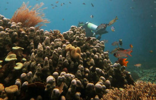New study confirms climate change driving global movement of marine species