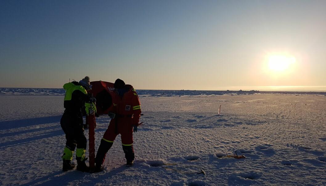 Selv om vi forskere setter pris på at solen skinner, er ikke livet i isen og havet helt fornøyd med mengden sollys enda.