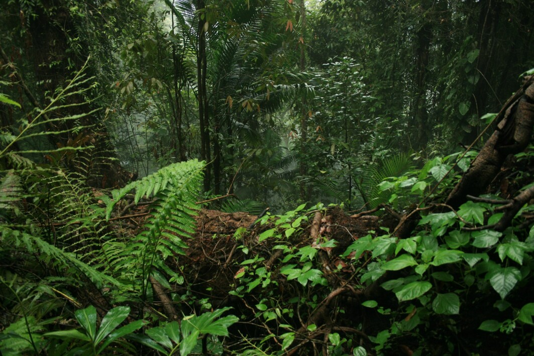 Geoengineering cannot replace other mitigation measures when it comes to maintaing the storage of carbon in forests, a new study shows.