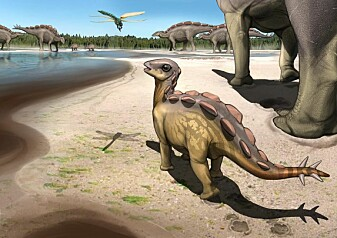 Forskere fant knøttlite fotavtrykk: Stegosaur-ungen var på størrelse med en katt
