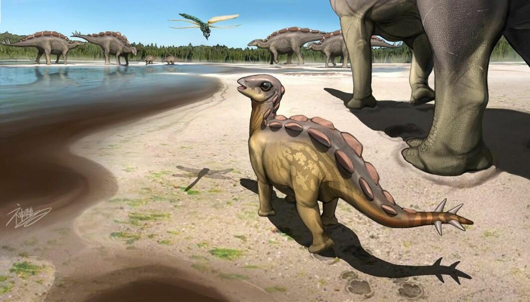 Her har en kunstner tegnet den lille stegosauren som går sammen med voksne og kikker på en øyenstikker.
